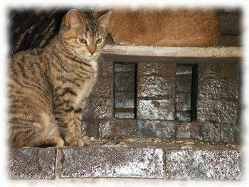 anagama kiln cats