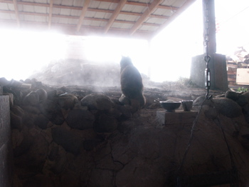 kiln's cats love a warm anagama