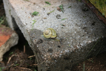 snail on kiln base